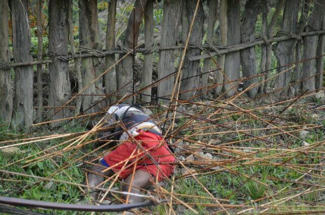 Foto Perang Suku Di Papua