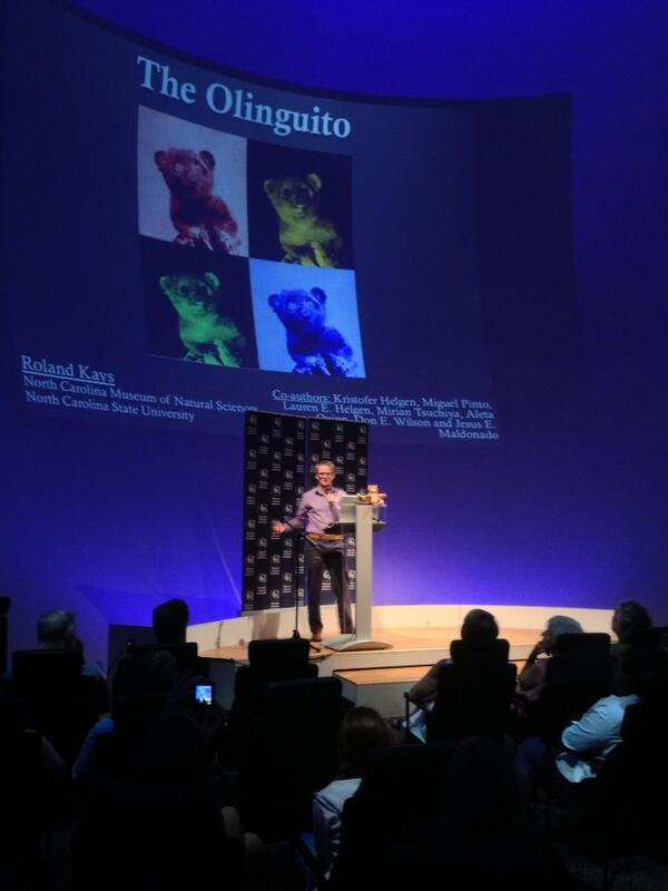 @RolandKays announces NEW CARNIVORE SPECIES - meet the OLINGUITO @naturalsciences http://twitter.com/Julie_Urban/status/368012853724209153/photo/1