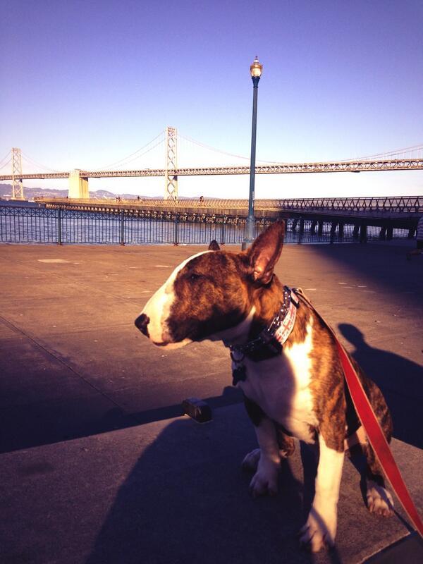So long bay bridge 🌉 http://twitter.com/MrTallsDog/status/373094359794593792/photo/1