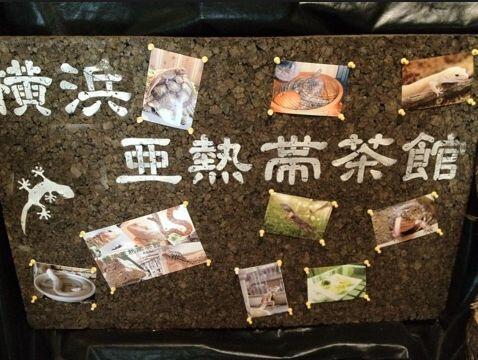 【横浜爬虫類カフェ】(横浜) 店内の爬虫類に触ることもできます。 ただ、苦手な人は落ち着かないでしょうねぇ 。。。