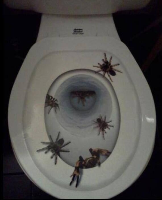 Astonishing Martyn Rosney On Twitter Best Worst Toilet Seat Cover Ever Pdpeps Interior Chair Design Pdpepsorg