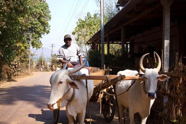 @poonamparihar Yups #IncredibleIndia...And I forgot the Old mode of Transport #BullockCart Ride :-) #TravelIndia http://twitter.com/ashish0712/status/372031424175427584/photo/1