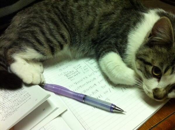 勉強しようとするといつもこうなる・・・ pic.twitter.com/kYsqGFv0nA @milk_halcat