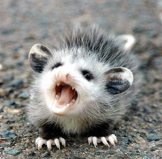 Smiling Possum Embedded image permalink