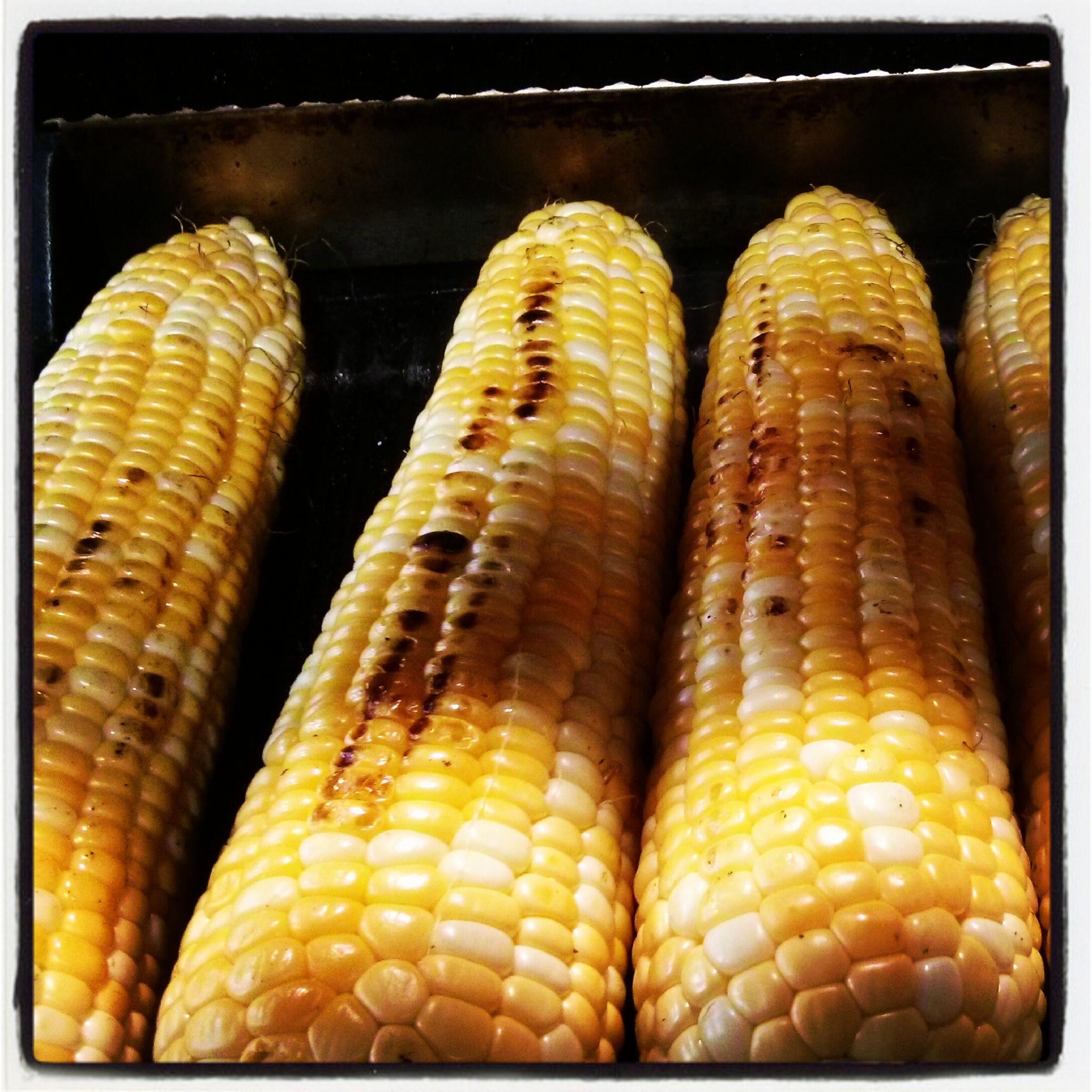 Twitter / sweetescapes: Grilling corn on the panini ...