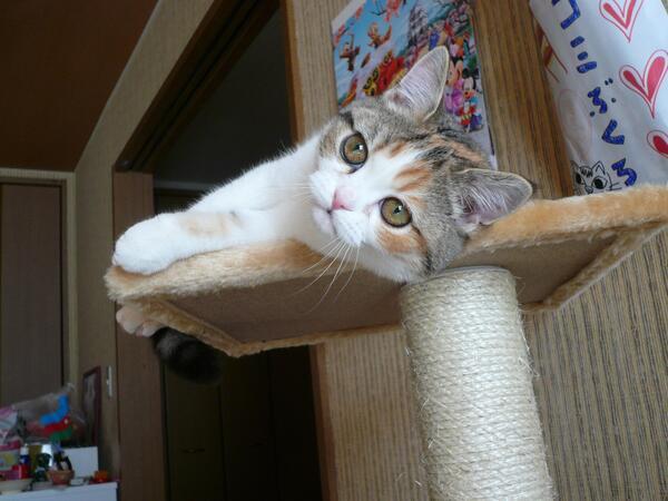 かわいい♡と思ったらRT https://t.co/WLdIyI5GqA #猫