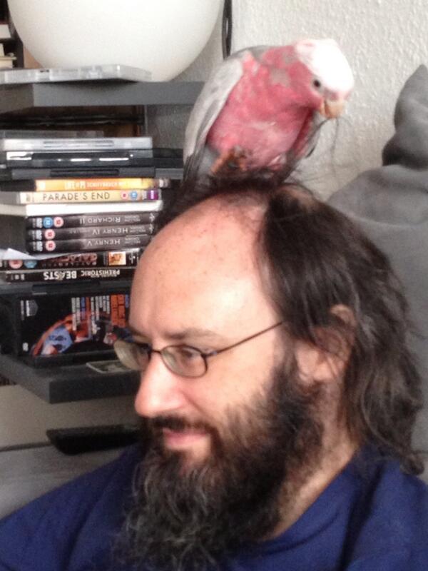 Hair-styling galahs