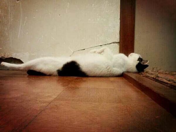 二階へ行こうと階段上りきったら、この状態で寝てました(^_^;) pic.twitter.com/Y7Mgd9x0cz @shyena1106