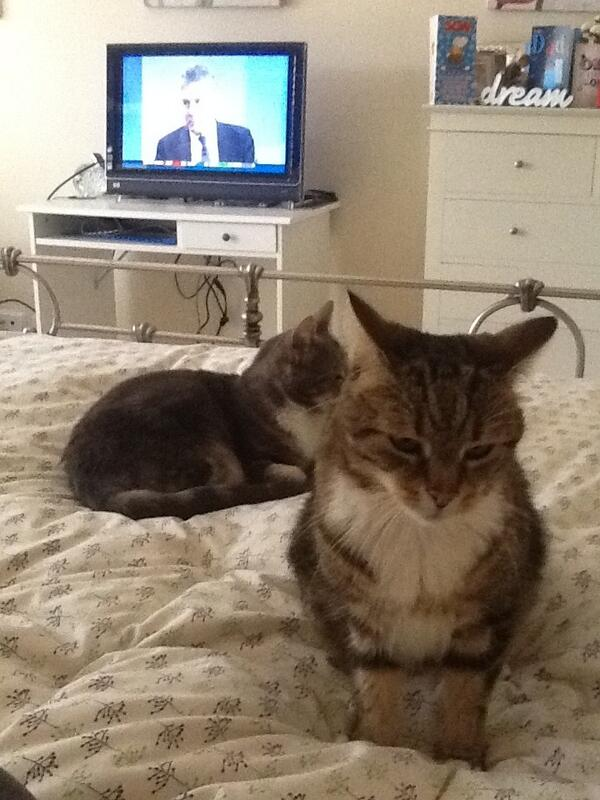 #electionparty #abcnews24 . We are not amused with the early results. http://twitter.com/SarahThomsonAU/status/376264226584551424/photo/1