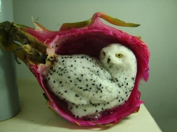 ドラゴンフルーツに彫られたシロフクロウ。ほんものみたい。