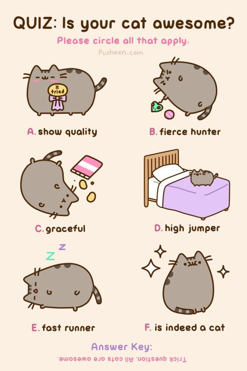 Pusheen the cat on Twitter quot QUIZ
