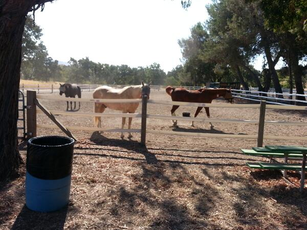 6 horses call Heather Farms Park in #WalnutCreek home for now b/c of #MorganFire. Room avail. for other horses @KTVU http://twitter.com/BrianFloresKTVU/status/377140833557827584/photo/1