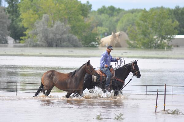 Greeley resident Tommy Meyer leads one of his horses to safety in South Platte River flood waters. #cofloods http://twitter.com/northfortynews/status/378660175210500096/photo/1