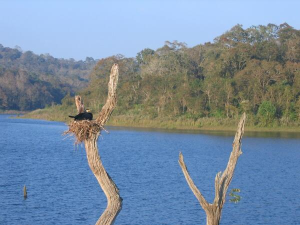 A2. #travelindia yes, been to kerala.. difficult to choose a fav pic, but here's one from Periyar which is special http://twitter.com/nrucho/status/379642224671068160/photo/1