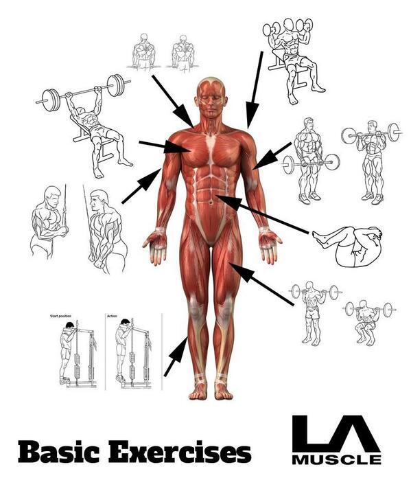 LA Muscle on Twitter