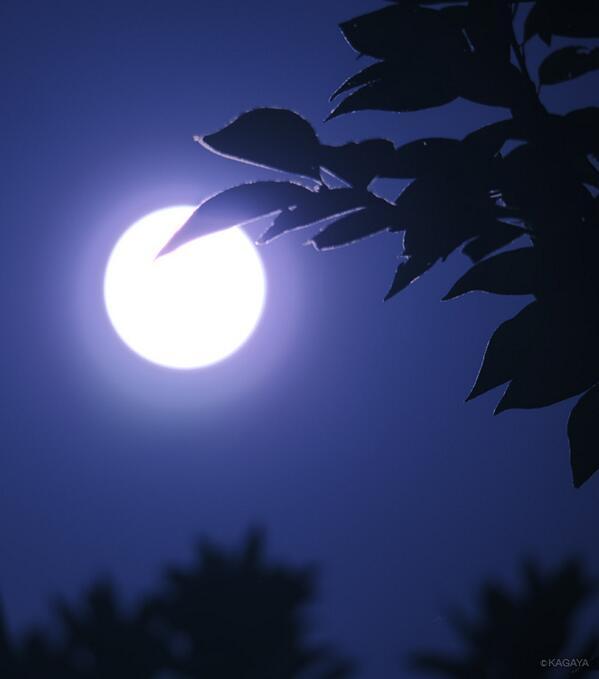 今、ちょうど満月になりました。見事な月夜です。
