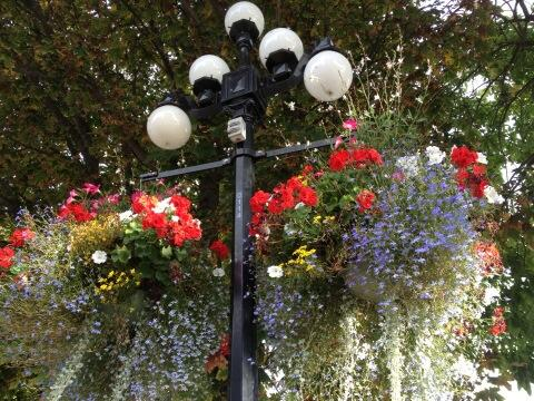 #PositiveThurs I live in the most beautiful garden city, these lovely baskets adorn our downtown. #Victoria http://twitter.com/Moto_Diva/status/380731946906554368/photo/1