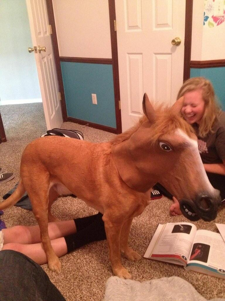 If you ever wondered what a dog in a horse head mask would look like wonder no more http://t.co/1mcoY4wdt4