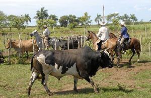 Desarrolla Camagüey proyecto ganadero e industrial