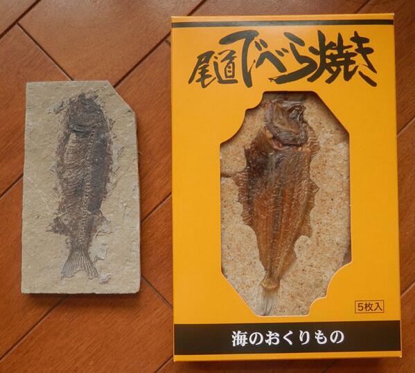 そして女房が尾道で買ってきてくれた「尾道でべら焼き」という土産の煎餅と古代魚の化石がほとんど同じな件。