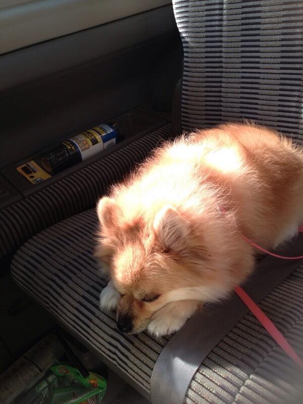 @dogspictures 車でひなたぼっこ