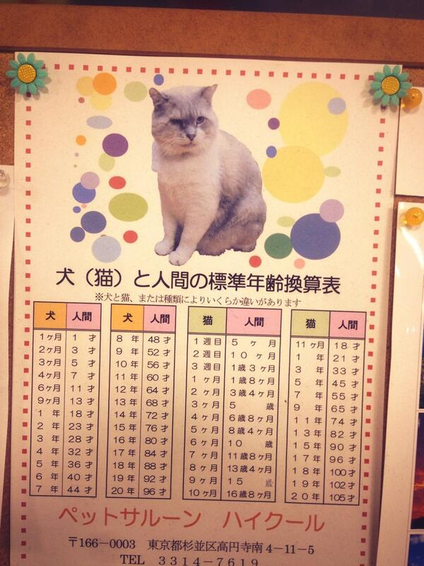 猫年齢らしいです!! pic.twitter.com/cN1nu8G2vJ