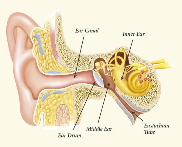 Medical Talks On Twitter By Videoanatomy Of The Ear And
