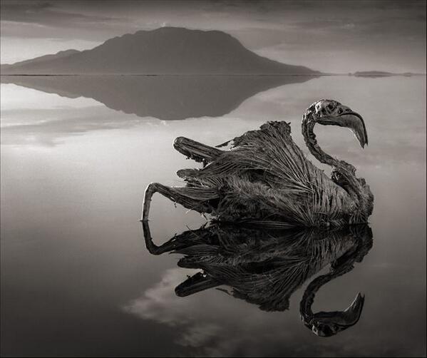 【ニュース&話題】これはスゴイ・・・触れるものすべてが石に変わる湖 ~タンザニア北部ナトロン湖の水はソーダと塩分を大量に含んでいて、生き物の硬化(石灰化)を招く~/GIZMODO