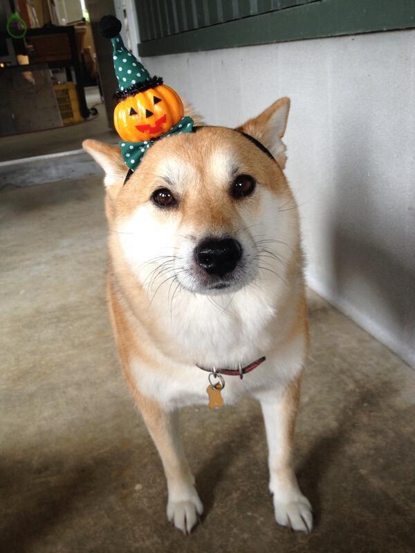 ことしのかぼちゃの おまつりはこれでおやつをねらいますー