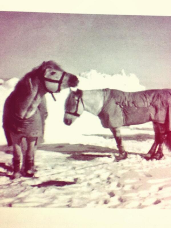 These ponies are NOT ready for the cold #DeathSalonLA http://t.co/r1SlCqxMm7