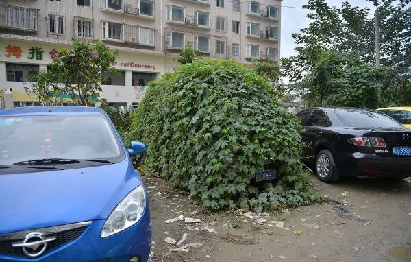 四川省の成都で、駐車場に一年以上放置されたワゴンの変わり果てた姿がニュースに http://news.163.com/photoview/00AP0001/39102.html#p=9BF1302700AP0001… 途中からみんな車だって忘れてたろな  んでもって警察に通報されて→