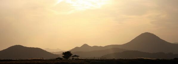 #갈대숲 #순천만 #dicadong   이 가을 잘보내고 계십니까 http://t.co/T275Mkhjsa