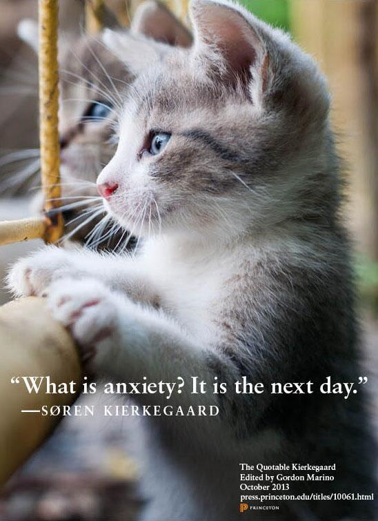 The Kierkegaardian Kittens are back! Stay tuned for more wit and wisdom from our existentialist feline friends! http://t.co/bG9TTKNzXd