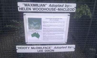Arsenal legend Lee Dixon moves to distance himself from owl ownership in adoption controversy