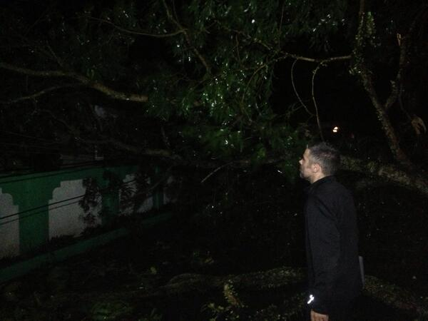 Tree down near the hotel in Baler, it brought down power lines too #SantiPH #typhoon #Nari http://twitter.com/typhoonfury/status/388708931196821504/photo/1