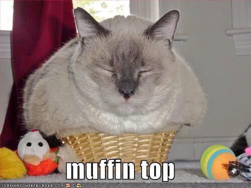 fat cats fatcats13 twitter