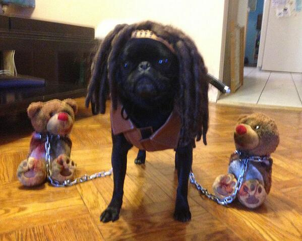 curiouslt on Twitter  Pixelu0027s Halloween costume this yearu2026 #thepuggingdead #michonne //t.co/TnbALB0a2H  & curiouslt on Twitter: