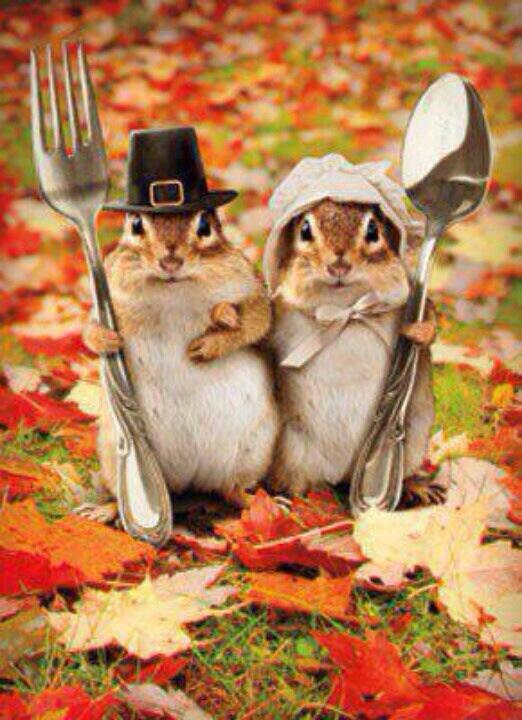Twitter / hahnsmith: Wishing you a happy thanksgiving ...