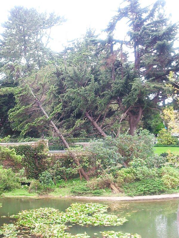 シンデレラ城の隣にある木が倒れてた((((;゚Д゚)))))))