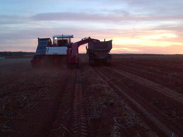 Beautiful potato harvest morning on PEI #fromthefield #harvest13 #peipotatoes http://t.co/cNh2gXXewh