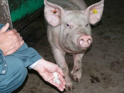 Stem je ook op de Varkensloterij? http://ons.dna.nl/ga-gemert-bakel Laatste week #Stukvanhetjaar http://twitter.com/ArchiefGB/status/392267671883902977/photo/1