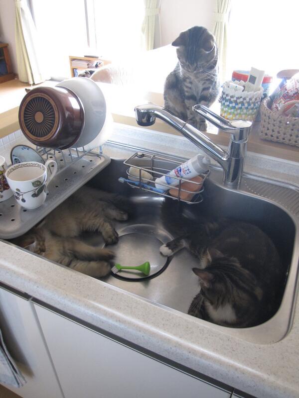 二年前 猫さんって、洗面台とかシンクが好きですよね。って、これっていいの? pic.twitter.com/GKm29GJyGM @chocco1107