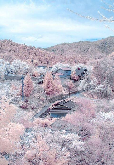 """test ツイッターメディア - 【<strong>吉野山</strong>・奈良】 桜の名所と知られる<strong>吉野山</strong>の桜は 麓から、<strong>下千本</strong>、中千本、上千本、奥千本と 順番に開花していき、4月いっぱいくらいは その美しい景色を楽しむ事が出来ます。 <strong>吉野山</strong>の桜は、日本のさくら名所100選にも選ばれています。 <a rel=""""noopener"""" target=""""_blank"""" href=""""https://t.co/KrwHlrykTl'"""" title=""""Twitter / ?"""" class=""""blogcard-wrap external-blogcard-wrap a-wrap cf""""><div class=""""blogcard external-blogcard eb-left cf""""><div class=""""blogcard-label external-blogcard-label""""><span class=""""fa""""></span></div><figure class=""""blogcard-thumbnail external-blogcard-thumbnail""""><img data-src=""""https://s0.wordpress.com/mshots/v1/https%3A%2F%2Ft.co%2FKrwHlrykTl%27?w=160&h=90"""" alt="""""""" class=""""blogcard-thumb-image external-blogcard-thumb-image lozad lozad-img"""" loading=""""lazy"""" width=""""160"""" height=""""90""""/><noscript><img src=""""https://s0.wordpress.com/mshots/v1/https%3A%2F%2Ft.co%2FKrwHlrykTl%27?w=160&h=90"""" alt="""""""" class=""""blogcard-thumb-image external-blogcard-thumb-image"""" width=""""160"""" height=""""90""""/></noscript></figure><div class=""""blogcard-content external-blogcard-content""""><div class=""""blogcard-title external-blogcard-title"""">Twitter / ?</div><div class=""""blogcard-snippet external-blogcard-snippet""""></div></div><div class=""""blogcard-footer external-blogcard-footer cf""""><div class=""""blogcard-site external-blogcard-site""""><div class=""""blogcard-favicon external-blogcard-favicon""""><img data-src=""""https://www.google.com/s2/favicons?domain=t.co"""" alt="""""""" class=""""blogcard-favicon-image external-blogcard-favicon-image lozad lozad-img"""" loading=""""lazy"""" width=""""16"""" height=""""16""""/><noscript><img src=""""https://www.google.com/s2/favicons?domain=t.co"""" alt="""""""" class=""""blogcard-favicon-image external-blogcard-favicon-image"""" width=""""16"""" height=""""16""""/></noscript></div><div class=""""blogcard-domain external-blogcard-domain"""">t.co</div></div></div></div></a> /></a></div></div></div></div></div></div></div><footer class=""""article-footer entry-footer""""><div class=""""entry-categories-tags ctdt-one-row""""><div class=""""entry-categories""""><a class=""""cat-link cat-link-36"""" href=""""https://www."""