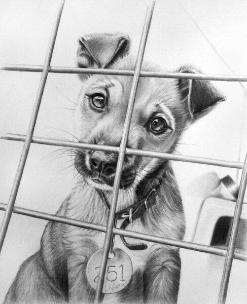Dibujos A Lápiz On Twitter Precioso Dibujo De Un Cachorro De