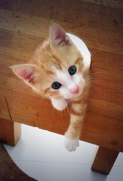 すみません…ハマっちゃったんで、向こうからひっぱってもらえませんか? #neko #cat #猫 #ねこ #ネコ