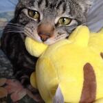 Image for the Tweet beginning: 電撃くらわすぞ。 #neko #cat #猫 #ねこ