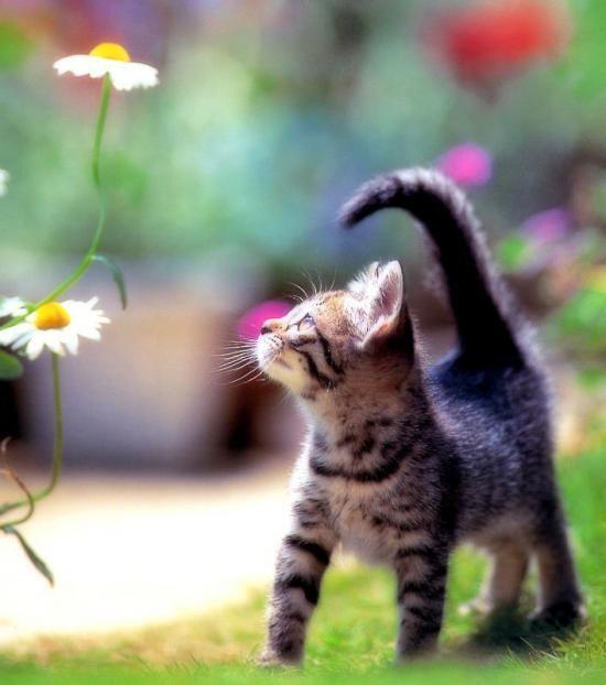 美しい花だな…心が洗われるぜ。 #neko #cat #猫 #ねこ #ネコ