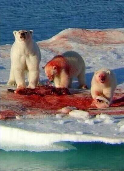 Yo pensé que nadamas tomaban Coca-Cola. http://t.co/VpyFPEiFQb