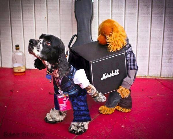 ebyron on twitter best dog costume ever rodiedog iatse