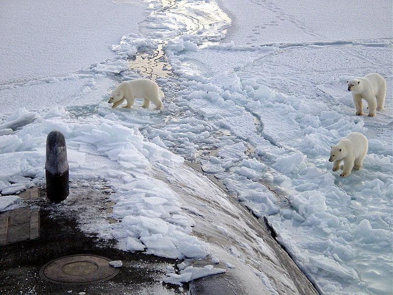 Twitter / Politics_PR: Polar bears approach the USS ...